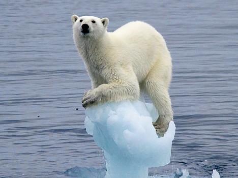polar-bears-putin-1